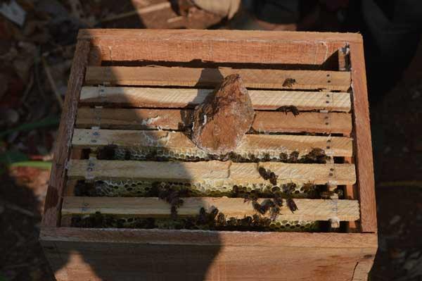 kani_honeybee_march2014_3442_web
